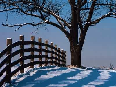 Fence To Tree Jigsaw Puzzle Jigzone Com