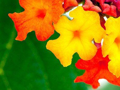 Daily Jigsaw Puzzle 2016-08-01 Flower OYG - JigZone.com - photo #41