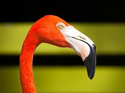 Flamingo Olive Jigsaw Puzzle