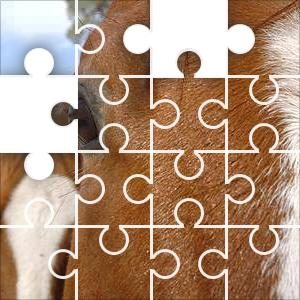 Chestnut Horses Jigsaw Puzzle - JigZone.com - photo#46