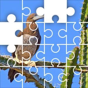 Brown Booby Jigsaw Puzzle - JigZone.com - photo #24
